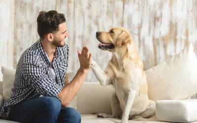 Hábitos y preferencias a la hora de viajar con perro