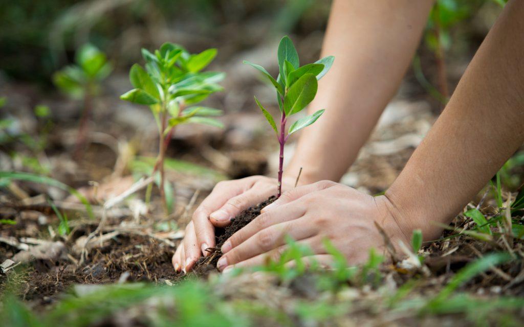 Estudio Sobre Conciencia Amenazas Y Acciones Sobre El Medio Ambiente