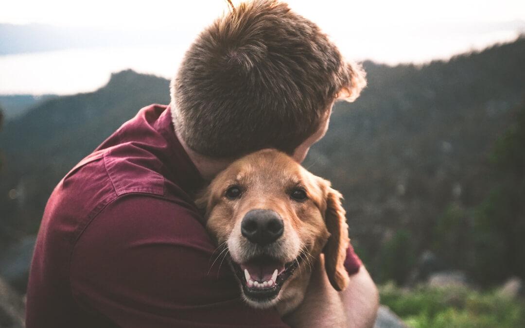 Estudio de mercado sobre Mascotas: uno más en la familia
